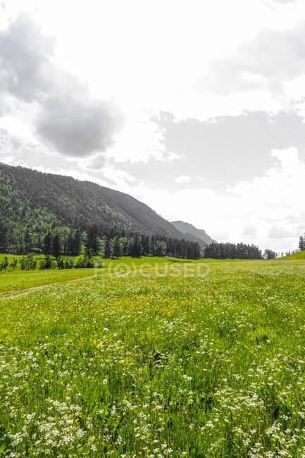 Альпийские пастбища с травой и деревьями против Хилл, Шнеберг, Нижняя Австрия — стоковое фото