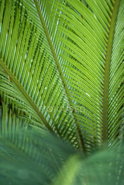 Close up view of green palm leaf — Stock Photo