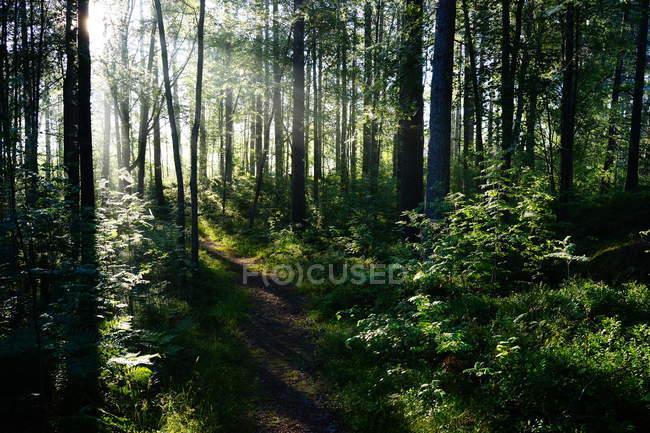 Forêt d'arbres et de buissons pendant la journée — Photo de stock