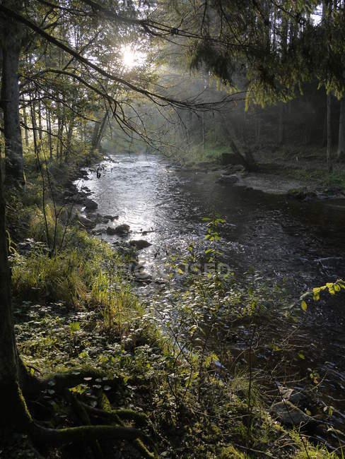 Гірський потік річки з рослинами на берегах — стокове фото