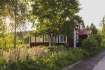 Red cottage with lush greenery and wildflowers in sunlight — Stock Photo