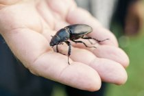 Beetle on male hand, close up shot — Stock Photo
