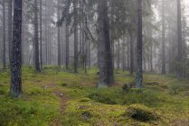 Front view of green forest — Stock Photo