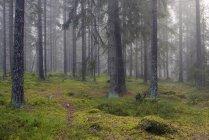 Vue de face de la forêt verte — Photo de stock