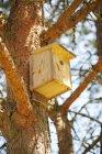 Низким углом зрения деревянный Птица дом на дереве — стоковое фото