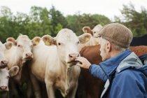Seitenansicht von Landwirt und Kühen, selektiver Fokus — Stockfoto