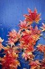 Vista superior de las hojas de otoño sobre fondo azul - foto de stock