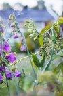 Close up de flores silvestres e folhas verdes — Fotografia de Stock