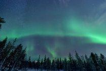 Перегляд дерев і Полярне сяйво освітлена небо — стокове фото