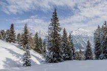 Alberi di pino sulla collina dello snowy e montagne su priorità bassa — Foto stock