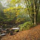 Grüne Waldbäume und Fluss im Soderasen Nationalpark — Stockfoto