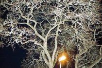 Vista de ángulo bajo del árbol iluminado por la linterna en la noche - foto de stock