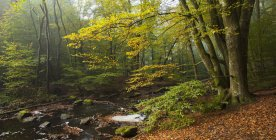 Bosque verde de árboles y río en el Parque Nacional Soderasen - foto de stock