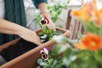 Nahaufnahme weiblicher Hände beim Pflanzen von Blumen — Stockfoto