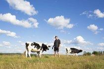 Фермер, позируя с коров на пастбище — стоковое фото