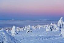 Verschneite Landschaft mit Pinien und Loipen auf Schnee — Stockfoto