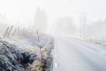 Матовое кусты и деревья у дороги в туман — стоковое фото