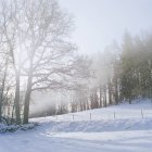 Bare trees on snow covered land - foto de stock