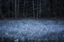 Frost covered plants in meadow, forest on background — Stock Photo