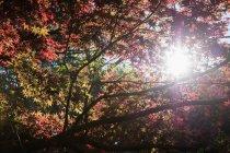 Низький кут зору гілки дерев і листя — стокове фото