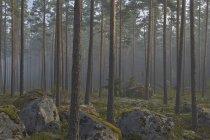 Blick auf Nadelwald mit Moos auf Felsen — Stockfoto