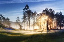 Route de campagne vide avec la lumière du soleil qui brille à travers les arbres — Photo de stock