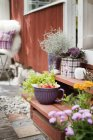 Potted plants and bowl with fresh tomatoes on front stoop — Stock Photo