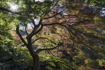 Tree with curved branches in backlit sunlight - foto de stock