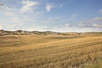 Vue de paysage de champ sec sous le ciel bleu — Photo de stock