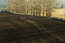 Paisaje otoñal con campo recién arado - foto de stock