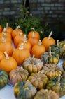 Vista de varias calabazas cosechadas frescas - foto de stock
