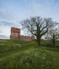 View of Hammershus fortress, green field and bare trees, Bornholm — Stock Photo