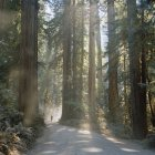 Man on footpath in sequoia forest — Stock Photo