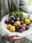 Man holding plate with fresh plums — Stock Photo