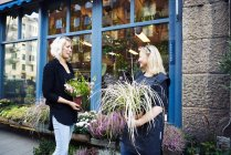 Two florists talking while holding potted plants — Stock Photo