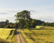 Camino rural en un paisaje verde con árboles - foto de stock