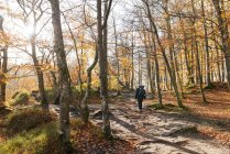 Person walking in forest during autumn — Stock Photo