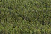 Vista de ángulo alto de bosque verde denso - foto de stock