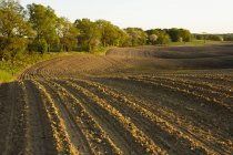 Agricultural field after plowing in evening sunlight — Stock Photo
