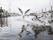 Pássaros de água no porto de Dargor, norte da Europa — Fotografia de Stock