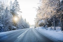 Empty road surrounded by snowy trees at sunrise — Stock Photo