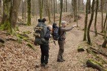 Dois homens caminhando na floresta de outono — Fotografia de Stock