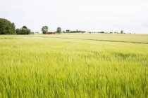 Vue panoramique sur le champ verdoyant en été — Photo de stock