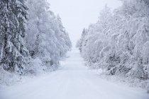 Route vide en forêt en hiver, Europe du Nord — Photo de stock