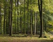 Vista panoramica della foresta verde, Europa del Nord — Foto stock
