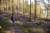 Visão traseira do caminhante feminino na floresta — Fotografia de Stock
