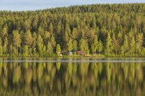 Scenic view of forest by river, sweden — Stock Photo