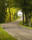 Живописный вид на дорогу в лесу, Швеция — стоковое фото