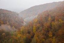 Visão de alto ângulo da floresta na névoa — Fotografia de Stock