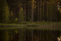 Forest by river at Vasterbotten County — Stock Photo